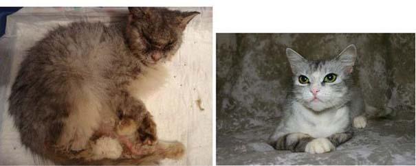 Γάτες πριν και μετά τη διάσωση τους (13)