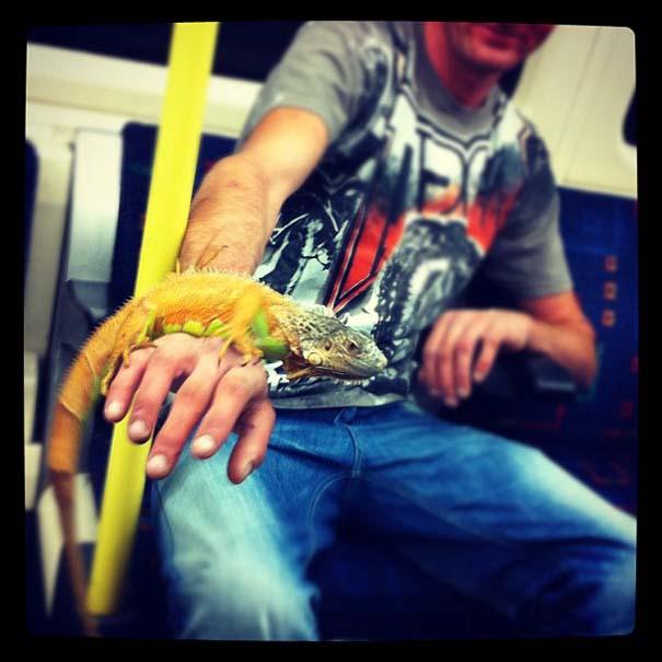 Παράξενες και κωμικοτραγικές φωτογραφίες στα μέσα μεταφοράς (17)
