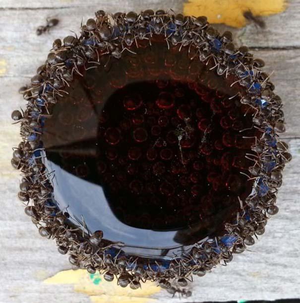 Μυρμήγκια & Pepsi (3)