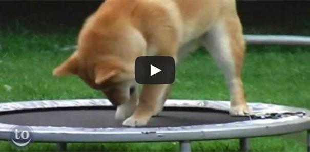 Όταν τα ζώα ανακαλύπτουν το τραμπολίνο