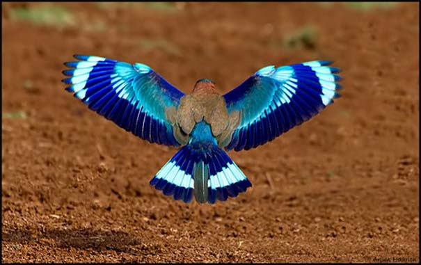 Παραδείγματα τέλειας γεωμετρίας στη φύση (3)