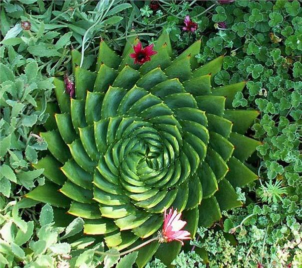 Παραδείγματα τέλειας γεωμετρίας στη φύση (5)