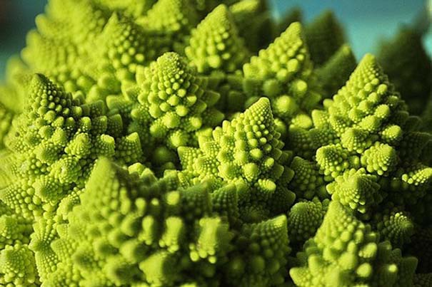 Παραδείγματα τέλειας γεωμετρίας στη φύση (6)
