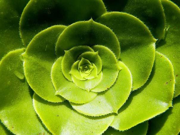 Παραδείγματα τέλειας γεωμετρίας στη φύση (7)