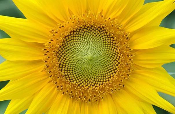 Παραδείγματα τέλειας γεωμετρίας στη φύση (8)