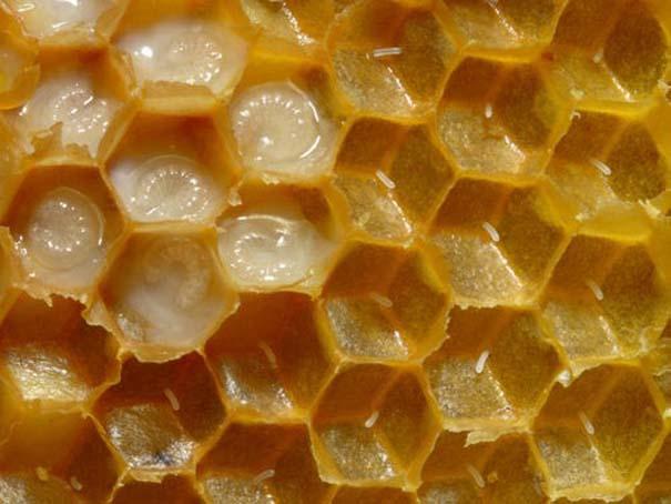 Παραδείγματα τέλειας γεωμετρίας στη φύση (14)