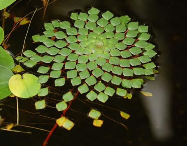 Παραδείγματα τέλειας γεωμετρίας στη φύση (15)
