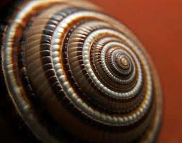 Παραδείγματα τέλειας γεωμετρίας στη φύση (24)