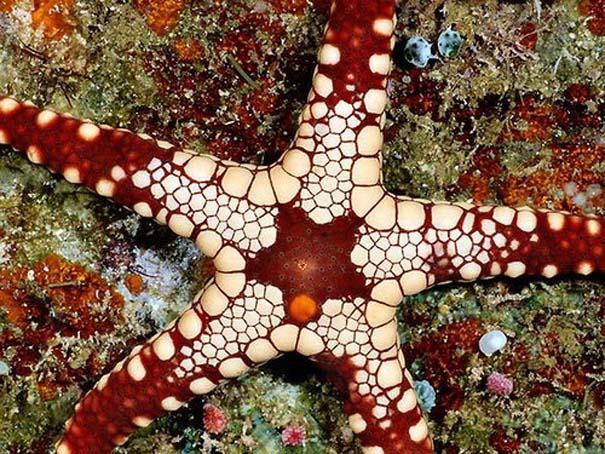Παραδείγματα τέλειας γεωμετρίας στη φύση (25)