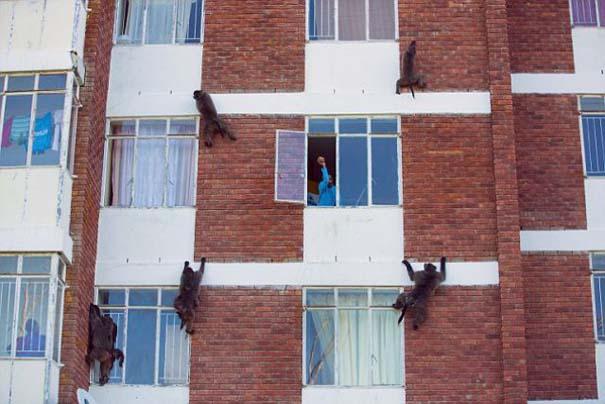 Παράξενη συμμορία τρομοκρατεί τους κατοίκους στο Cape Town (3)