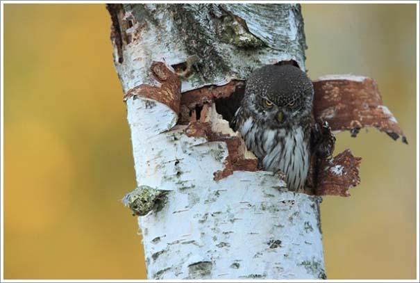 Περίεργες & εντυπωσιακές φωτογραφίες της άγριας φύσης (3)