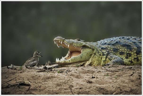 Περίεργες & εντυπωσιακές φωτογραφίες της άγριας φύσης (4)