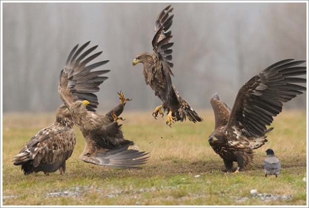 Περίεργες & εντυπωσιακές φωτογραφίες της άγριας φύσης (6)