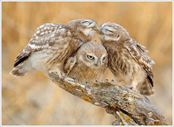 Περίεργες & εντυπωσιακές φωτογραφίες της άγριας φύσης (7)