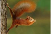 Περίεργες & εντυπωσιακές φωτογραφίες της άγριας φύσης (9)