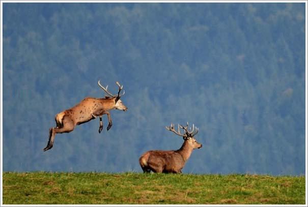 Περίεργες & εντυπωσιακές φωτογραφίες της άγριας φύσης (11)