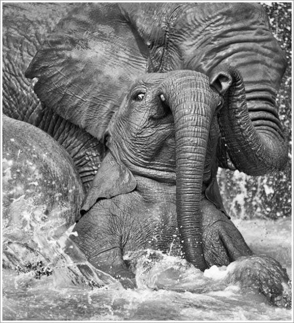 Περίεργες & εντυπωσιακές φωτογραφίες της άγριας φύσης (15)