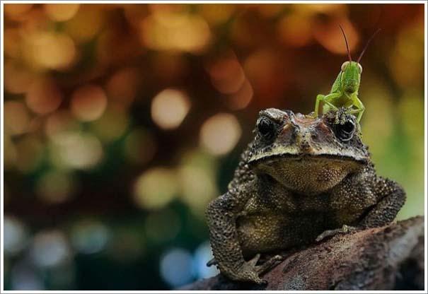 Περίεργες & εντυπωσιακές φωτογραφίες της άγριας φύσης (16)