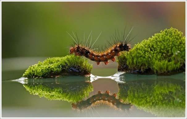 Περίεργες & εντυπωσιακές φωτογραφίες της άγριας φύσης (17)