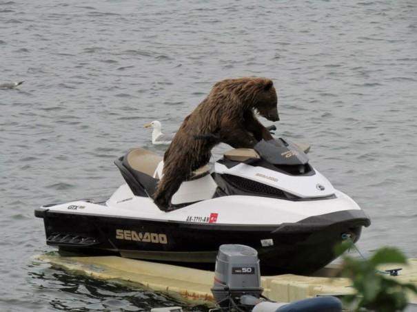Εν τω μεταξύ, στην Αλάσκα... | Φωτογραφία της ημέρας