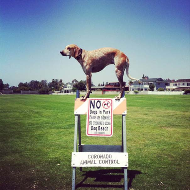 Σκύλοι που γεννήθηκαν επαναστάτες (1)