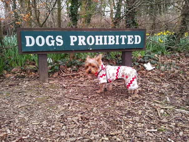 Σκύλοι που γεννήθηκαν επαναστάτες (3)