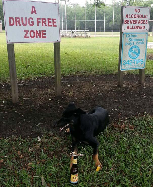 Σκύλοι που γεννήθηκαν επαναστάτες (4)