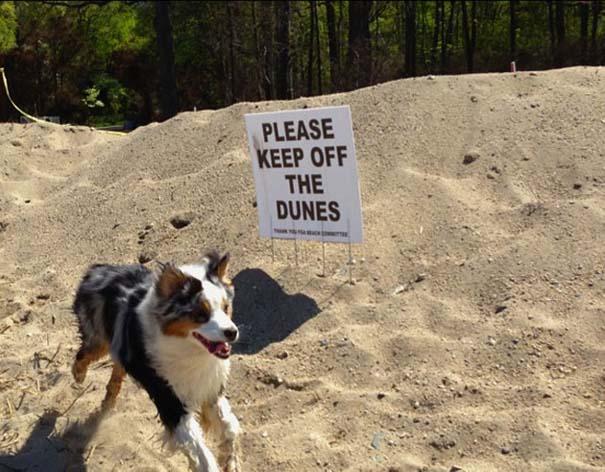 Σκύλοι που γεννήθηκαν επαναστάτες (5)