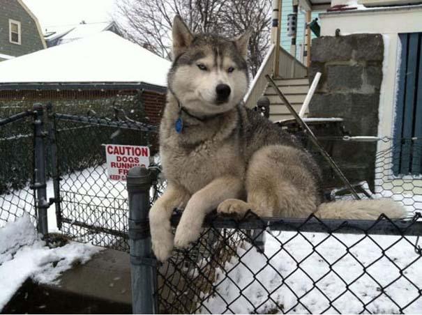 Σκύλοι που γεννήθηκαν επαναστάτες (6)