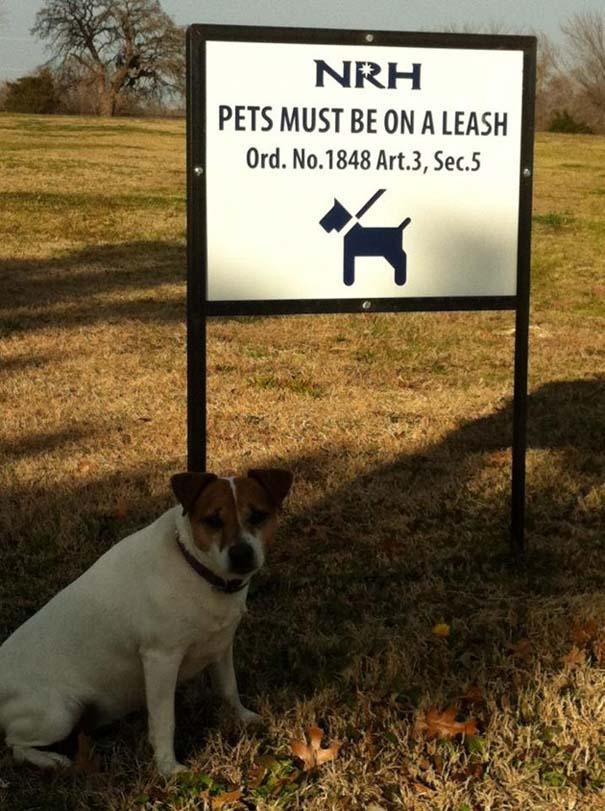Σκύλοι που γεννήθηκαν επαναστάτες (8)