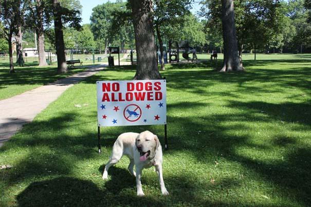 Σκύλοι που γεννήθηκαν επαναστάτες (10)