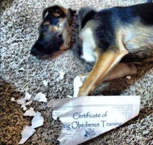 Σκύλοι που γεννήθηκαν επαναστάτες (12)