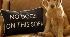 18 σκύλοι που γεννήθηκαν επαναστάτες