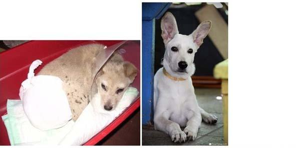 Σκύλοι πριν και μετά τη διάσωση τους (1)