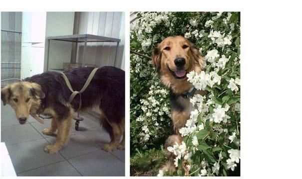 Σκύλοι πριν και μετά τη διάσωση τους (7)