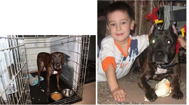 Σκύλοι πριν και μετά τη διάσωση τους (12)