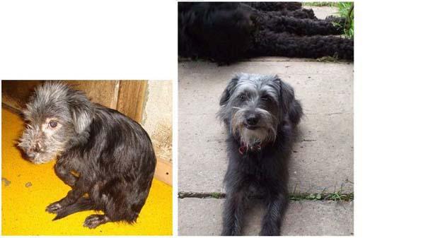 Σκύλοι πριν και μετά τη διάσωση τους (14)