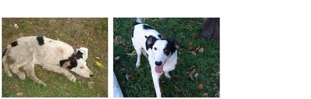 Σκύλοι πριν και μετά τη διάσωση τους (15)
