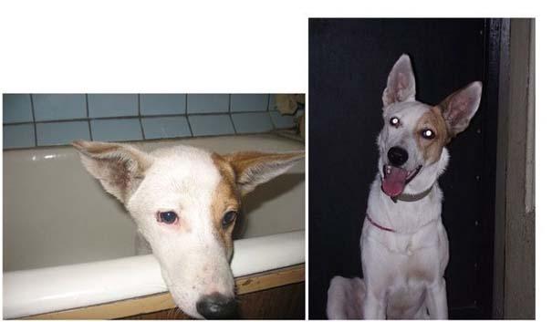 Σκύλοι πριν και μετά τη διάσωση τους (17)