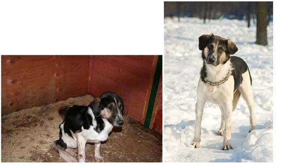 Σκύλοι πριν και μετά τη διάσωση τους (19)