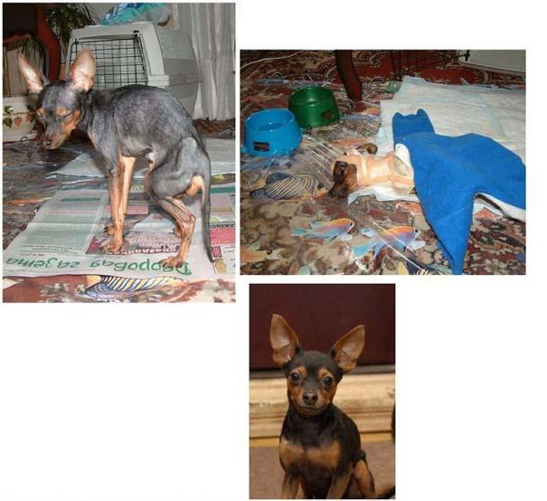 Σκύλοι πριν και μετά τη διάσωση τους (21)
