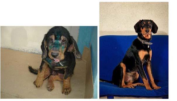 Σκύλοι πριν και μετά τη διάσωση τους (23)