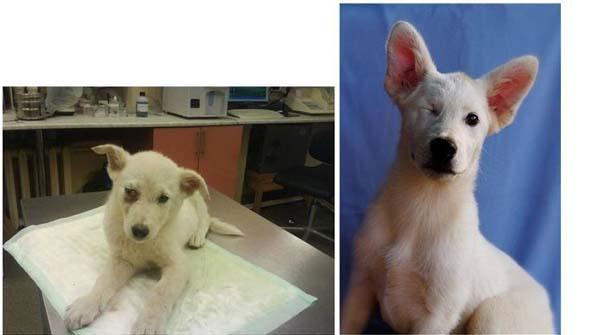 Σκύλοι πριν και μετά τη διάσωση τους (24)