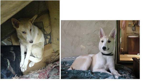 Σκύλοι πριν και μετά τη διάσωση τους (25)