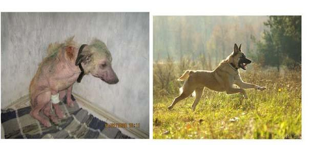 Σκύλοι πριν και μετά τη διάσωση τους (26)