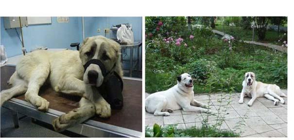 Σκύλοι πριν και μετά τη διάσωση τους (27)