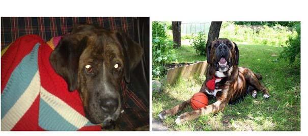 Σκύλοι πριν και μετά τη διάσωση τους (28)