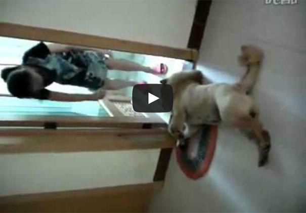 Σκύλος κάνει τον ψόφιο κοριό για να αποφύγει το μπάνιο