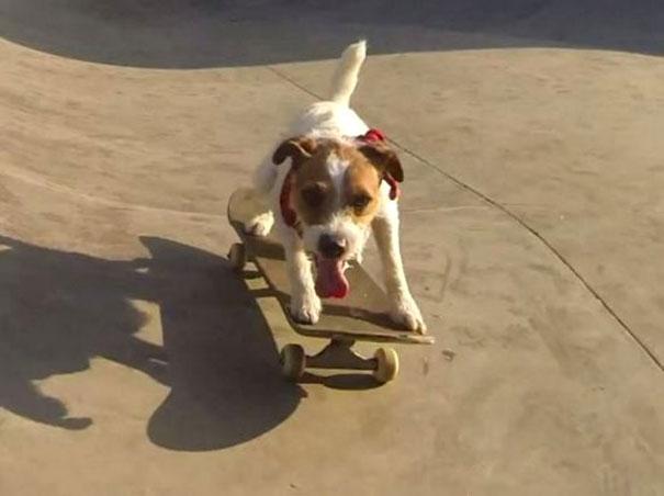 Ένας τετράποδος μάγος του skateboard