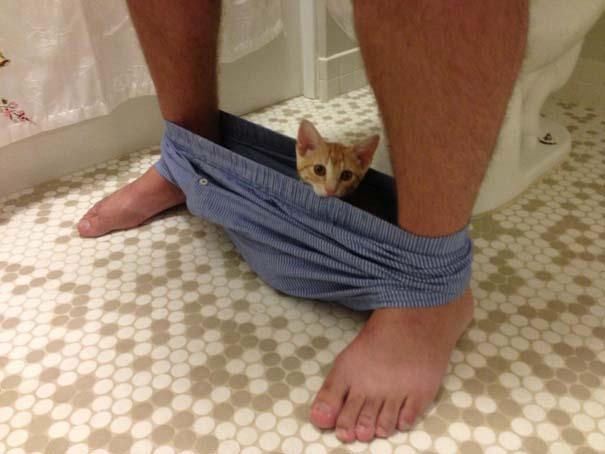 Ζώα που δεν καταλαβαίνουν πως δεν θες παρέα στην τουαλέτα (1)